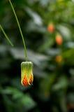 Een gele bloem zoals een tegenhanger Stock Fotografie