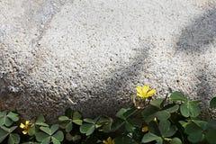 Een gele kleine bloem met steen op de achtergrond royalty-vrije stock afbeelding
