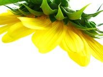 Een gele kroonluchter royalty-vrije stock foto's