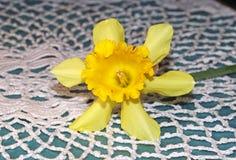 Een gele gele narcisbloem op met de hand gemaakte gehaakt royalty-vrije stock fotografie