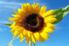 Een gele zon Stock Foto's