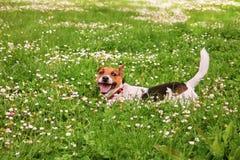 Een gelukkig puppy Stock Fotografie