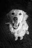Een gelukkig puppy Stock Foto