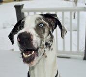 Een gelukkig puppy Royalty-vrije Stock Afbeelding