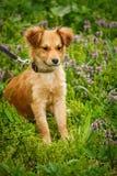 Een gelukkige hond loopt in het gras en de bloemen De puppygangen in de wildernis Stock Afbeeldingen