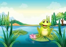 Een gelukkige kikker boven een waterlelie Stock Foto