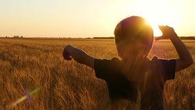 Een gelukkige kindlooppas door een gebied van rijpe, gouden tarwe bij zonsondergang stock video