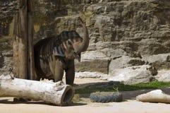 Een gelukkige olifant Stock Afbeelding