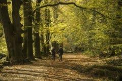 Een gelukkige oude paargang door het romantische de Herfstbos stock foto