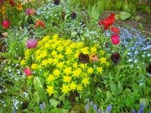 Een gemengde bloemgrens Stock Foto's