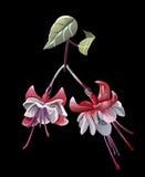 Een gestileerde bloem Stock Fotografie