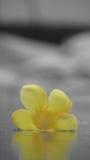 Een gevallen bloem Stock Afbeelding