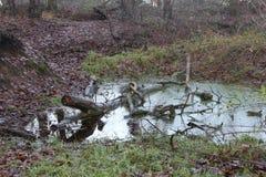 Een Gevallen Boom van Forest Pond With A binnen Stock Afbeeldingen