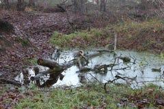 Een Gevallen Boom van Forest Pond With A binnen Stock Foto's