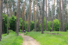 Een gezonde levensstijl en de schoonheid van het bos Stock Afbeeldingen