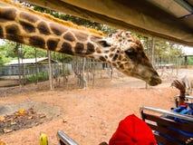 Een giraf die zijn hals uitrekken royalty-vrije stock afbeelding