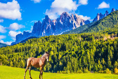 Een glad, slank paard stock fotografie