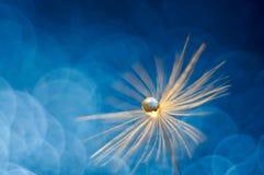 Een glanzende daling van water op de paardebloempluis Abstracte mooie blauwe achtergrond Macro, zachte nadruk Mooie groetkaart vo royalty-vrije stock foto