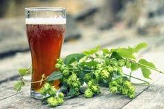 Een glas koud bier met verse hop stock fotografie