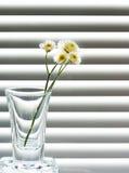 Een glas met een twijg van wilde bloemen Royalty-vrije Stock Foto