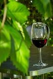 Een glas rode wijn bevindt zich in het midden van wilde druiven royalty-vrije stock afbeeldingen