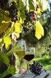 Een glas witte wijn Een fles wijn Vinnic Rijpe druivenwijn Donkerrode druiven Wijngaard De kelder van de wijn royalty-vrije stock fotografie