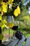 Een glas witte wijn Een fles wijn Vinnic Rijpe druivenwijn Donkerrode druiven Wijngaard De kelder van de wijn stock foto's