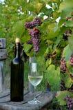 Een glas witte wijn Een fles wijn Vinnic Rijpe druivenwijn Donkerrode druiven Wijngaard De kelder van de wijn stock foto