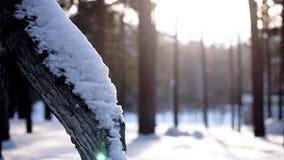 Een GLB van sneeuw ligt op de boom stock video