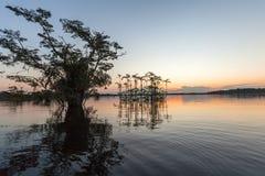Een glimp in Cuyabeno-het Wildreserve, Sucumbios-Provincie Royalty-vrije Stock Foto's