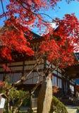 Een glimp van de Herfst Stock Afbeelding