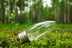 Een gloeilamp in een bos op het gras Royalty-vrije Stock Foto's