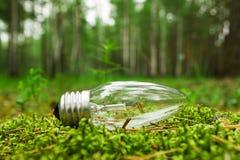 Een gloeilamp op het gras op de achtergrond van een bos Royalty-vrije Stock Afbeelding