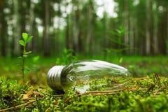 Een gloeilamp op het gras op de achtergrond van een bos Stock Foto's