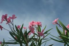 Een goed typisch landschap van een bloem royalty-vrije stock fotografie