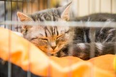 Een goede vrijwilliger geeft een dakloze kat aan een nieuwe eigenaar stock afbeelding