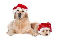 Een Golden retriever en een kleine kruising die Kerstmishoeden dragen Royalty-vrije Stock Fotografie