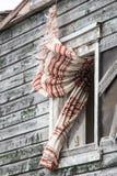 Een gordijn uit het venster Royalty-vrije Stock Afbeeldingen