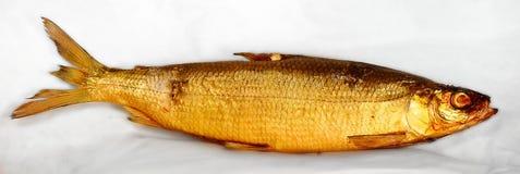 Een gouden gerookte haring op wit Royalty-vrije Stock Foto