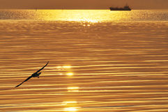 Een gouden overzees Stock Fotografie
