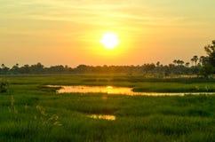 Een Gouden Zonsondergang over de Okavango-Delta in Botswana Stock Fotografie