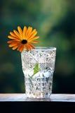 Een goudsbloem in een kristalglas Royalty-vrije Stock Fotografie