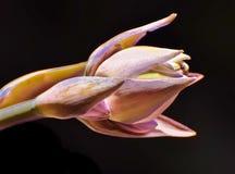 Een grafisch verwerkt beeld van een het bloeien hosta stock foto