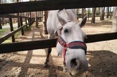Een grappig paard Royalty-vrije Stock Foto's