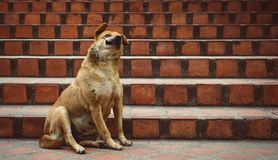 Een grappige binnenlandse hond naast de treden, met een grappige uitdrukking van snuit Stock Foto