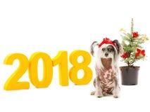 Een grappige hond in een Nieuwjaar ` s GLB zit op een achtergrond van cijfers 2018 en een decoratieve Kerstboom Geïsoleerde binne Royalty-vrije Stock Fotografie