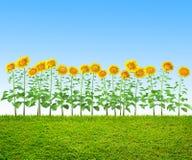 Een gras en zonnebloemen bij binnenplaats royalty-vrije illustratie