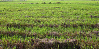 Een grasgebied. Royalty-vrije Stock Foto's