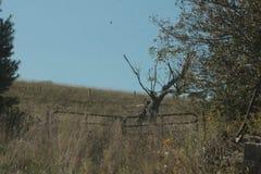 Een griezelige boom op het gebied Stock Foto