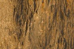 Een grijze gele oude droge boomboomstam met barsten en schaduwen natuurlijke oppervlaktetextuur stock afbeeldingen